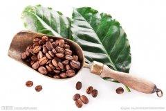 中国的咖啡起源 云南咖啡海南咖啡台湾咖啡
