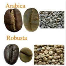 阿拉比卡咖啡豆和罗伯斯塔咖啡豆有何区别?形状差异风味特色不同
