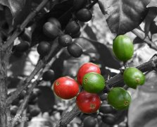 高品质巴西种植产地