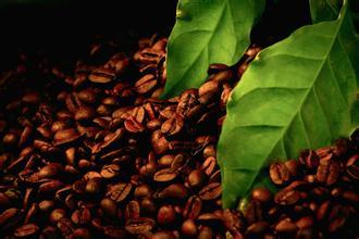 咖啡树什么时候能结果风味描述口感品种特点产地区处理法介绍