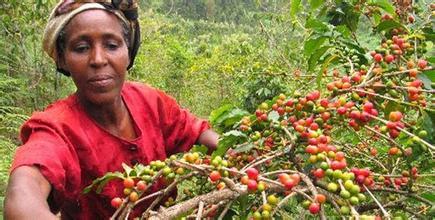 咖啡在中国的传播与发展情况市场分析文化差异现代发展介绍