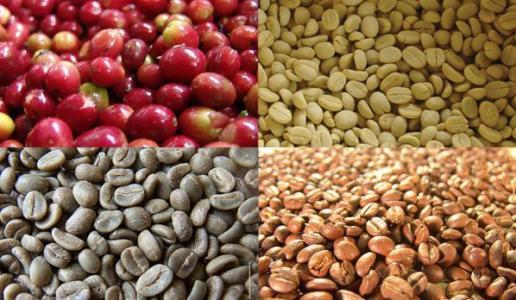咖啡滤压壶咖啡粉和水的比例-手冲咖啡粉和水的比例
