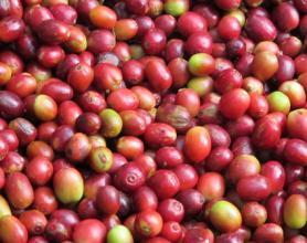 埃塞俄比亚咖啡豆故事特点风味描述产地区品种介绍