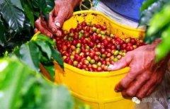 柔滑口感的哥伦比亚精品咖啡豆风味口感香气特征描述简介