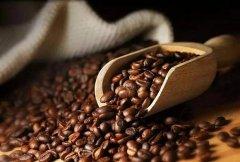牙买加蓝山咖啡口感风味 牙买加蓝山特点
