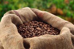 牙买加蓝山正确喝法 蓝山咖啡豆价格