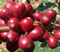咖啡交易有保障!中行云南省分行成功叙做首笔咖啡保值业务