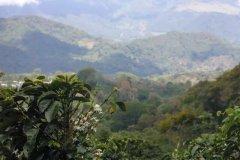 上岛UCC咖啡114和117的区别 红绿蓝口感风味特征介绍