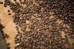 铁皮卡咖啡:咖啡店咖啡传统种类铁皮卡咖啡味道风味特点