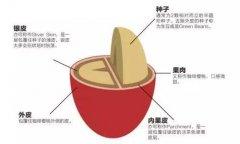 咖啡豆处理法 日晒处理法和水洗处理法有什么区别特点