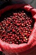 耶加雪菲G2水洗埃塞俄比亚单品咖啡豆有哪些 耶加雪菲咖啡风味