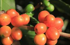 单品咖啡豆淘宝销量最好的五款 咖啡豆风味描述价格多少钱烘焙度