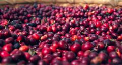 马来西亚LIMS零涩蓝山速溶咖啡淘宝销量最好的咖啡价格风味描述