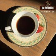 适合做soe的咖啡豆选单品咖啡 耶加雪菲日晒果丁丁soe制作教程