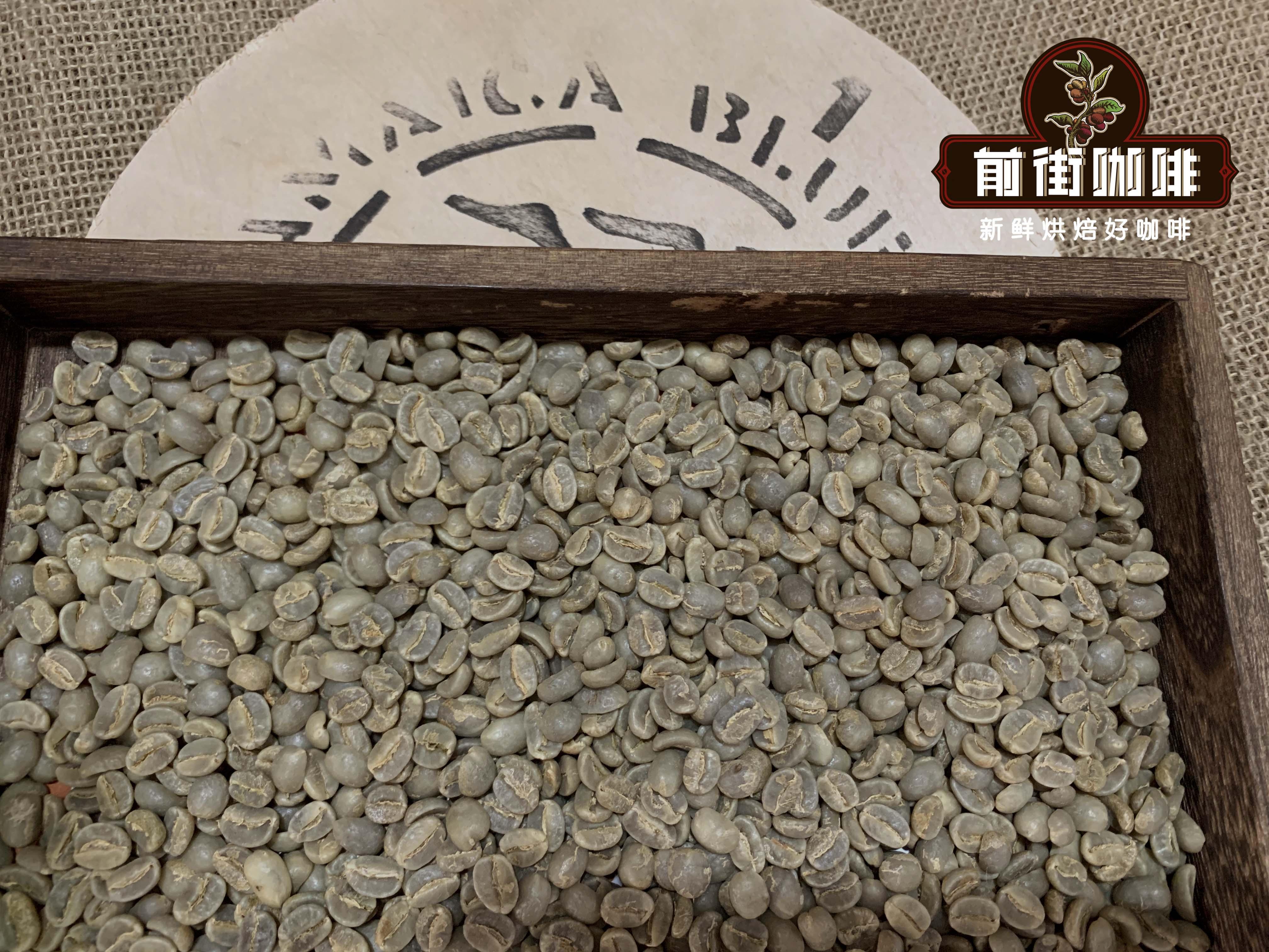 正宗蓝山咖啡生豆分级等级制度 蓝山咖啡铁皮卡品种风味口感特点